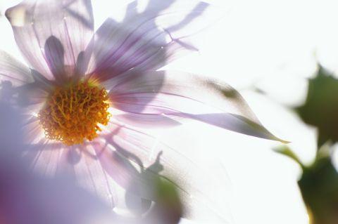 Flower Piece 8.jpg